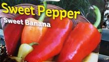 Sweet Banana Pepper Plant